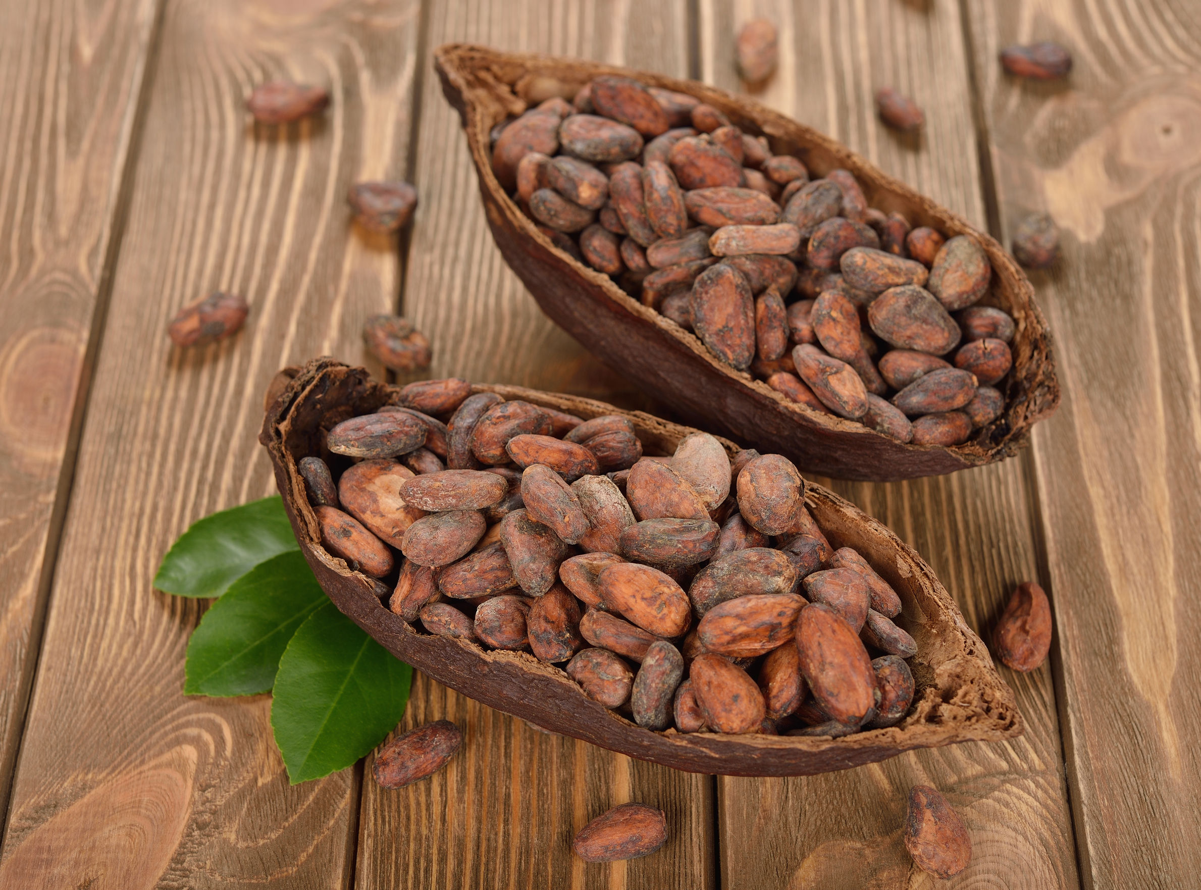 Do Cocoa Beans Grow in the USA?